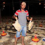 Nos aviários é necessário ventilação e região ficou quase 40 horas sem energia, causando morte de mais de 30 mil frangos. (Foto: IviNotícias)
